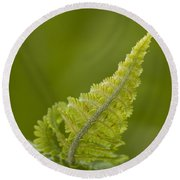 Elegant Fern. Round Beach Towel