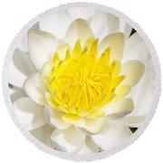 Elegant Lotus Round Beach Towel by Christopher L Thomley