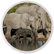 Elephant 3 Round Beach Towel