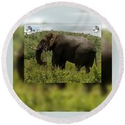 Elephant 4 Round Beach Towel