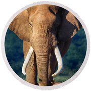 Elephant Approaching Round Beach Towel