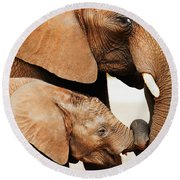 Elephant Calf And Mother Close Together Round Beach Towel