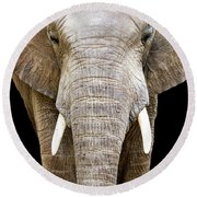 Elephant Face Closeup Looking Forward Round Beach Towel