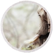 Elephant In Dreamy Woods Round Beach Towel