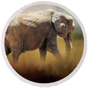 Round Beach Towel featuring the photograph Elephant In The Mist by David and Carol Kelly