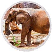 Elephant Mixed -wildlife Round Beach Towel