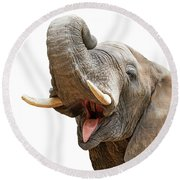 Elephant Mouth Open Trunk Up Closeup Round Beach Towel