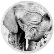 Elephant Portrait In Black And White Round Beach Towel