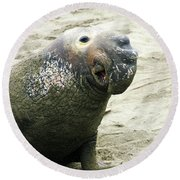 Round Beach Towel featuring the photograph Elephant Seal by Anthony Jones