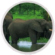 Elephant Shower Round Beach Towel