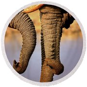 Elephant Trunks Interacting Close-up Round Beach Towel