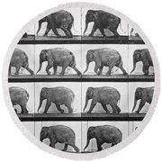 Elephant Walking Round Beach Towel