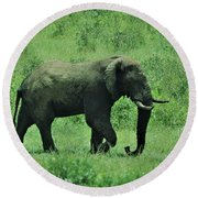 Elephant Walks Round Beach Towel