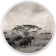 Elephants Round Beach Towel