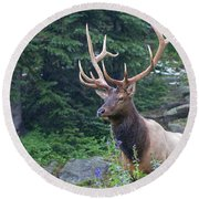 Round Beach Towel featuring the photograph Elk 4 by Gary Lengyel