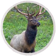 Round Beach Towel featuring the photograph Elk 5 by Gary Lengyel