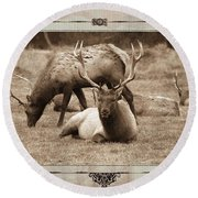 Round Beach Towel featuring the photograph Elk by Athala Carole Bruckner