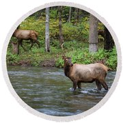 Elks By The Stream Round Beach Towel