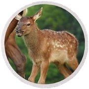 Elk Calf Arrives Round Beach Towel