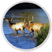 Elk Round Beach Towel by Cindy Murphy - NightVisions