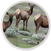 Elk Cows Trio Round Beach Towel