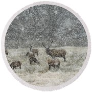 Elk Harem In Falling Snow Round Beach Towel