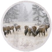 Elk In A Snow Storm - 1135 Round Beach Towel