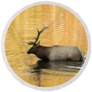 Elk In Golden River Round Beach Towel