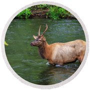 Elk In The Stream 2 Round Beach Towel