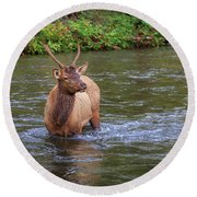 Elk In The Stream 3 Round Beach Towel