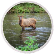 Elk In The Stream Round Beach Towel