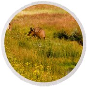 Elk In The Wild Flowers Round Beach Towel by Cathy Donohoue