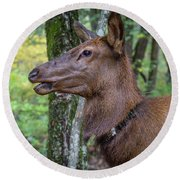 Elk In The Woods Round Beach Towel