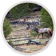 Elk In Yellowstone Round Beach Towel