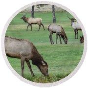 Elk On Golf Course Estes Park Colorado Round Beach Towel