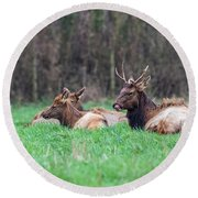 Round Beach Towel featuring the photograph Elk Relaxing by Paul Freidlund