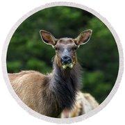 Elk Staring Closeup Portrait Round Beach Towel
