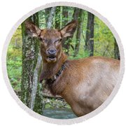 Elk In The Woods 2 Round Beach Towel