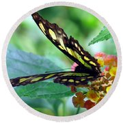 Elusive Butterfly Round Beach Towel