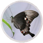 Emerald Peacock Swallowtail Butterfly V2 Round Beach Towel