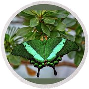 Emerald Swallowtail Butterfly Round Beach Towel by Ronda Ryan