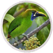Emerald Toucanet Round Beach Towel
