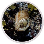 Emerging Hermit Round Beach Towel by Adria Trail