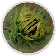 Emerging Sunflower Round Beach Towel