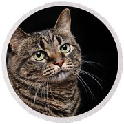 Emmy The Cat Ponder Round Beach Towel
