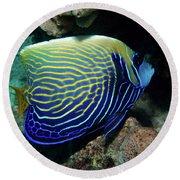 Emperor Angelfish, Red Sea 1 Round Beach Towel