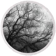 Round Beach Towel featuring the photograph Enchanted Forest by Ana V Ramirez