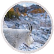 Enchantments Local Goat Resident Round Beach Towel by Mike Reid