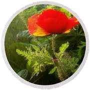 Red Poppy At Sunset Round Beach Towel