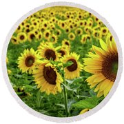 Round Beach Towel featuring the photograph Endless Sunflowers by Rod Best